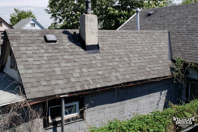 Hamilton Connected Roofs